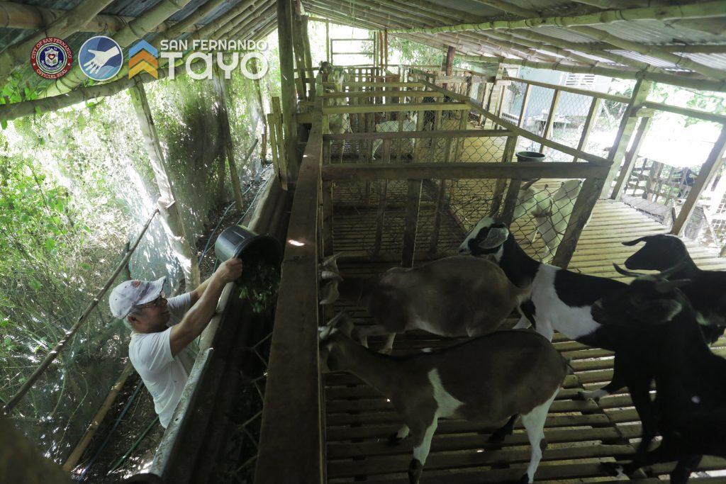 07012021_goat assistance_farmer_03_egbeleo